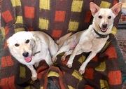 Собачки сестренки из приюта