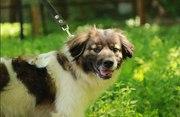 Ищет заботливых и любящих хозяев очаровательный пес Бим.