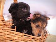 Привитые щенки из приюта